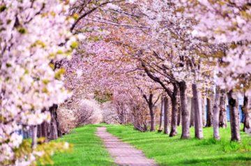 3月はロゼ祭!の画像
