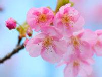3月はロゼ祭!
